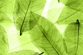 Картинка листья, green, abstract, leaves, macro, transparent