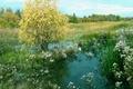 Картинка лето, вода, Лес