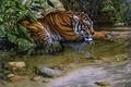 Картинка Lee Kromschroeder, cat, painting, tiger, thirsty, stream, beast of prey, Tiger River, jungle