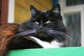 Картинка кошка, животные, усы, деревня, кошки, крыльцо