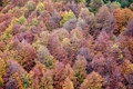 Картинка wood, trees, fall, fall palette, autumn, autumn palette, leaves, autumn colors, forest, fall colors, foliage
