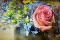 Картинка стиль, цветы, роза
