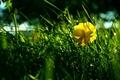 Картинка Трава, зеленый, цветок