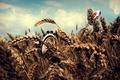 Картинка Облака, поле, обработка, пшеница