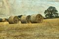 Картинка поле, пейзаж, стиль, сено