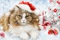 Картинка кошка, кот, рендеринг, праздник, игрушки, новый год, украшение