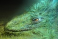 Картинка Дракон, голова, трава, зеленый