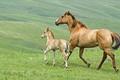 Картинка трава, лошадь, жеребенок