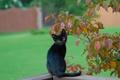 Картинка листья, ветки, чёрный котёнок