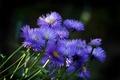 Картинка цветы, природа, растения