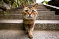 Картинка кот, взгляд, котэ, моська