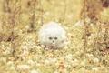 Картинка кошка, белая, клевер