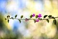 Картинка листья, обработка, ветка, боке