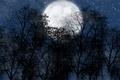 Картинка звезды.небо, луна, ночь, лес