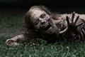Картинка Ходячие мертвецы, сериал, The Walking Dead, zombie, трава, serial, зомби