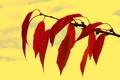 Картинка природа, ветка, осень, листья