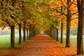 Картинка каштаны, парк, алея, осень, природа
