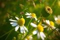 Картинка макросъемка, желтый, цветок