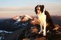 Картинка радость, горы, настроение, собака, Бордер-колли