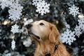 Картинка праздник, собака, ёлка