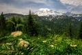 Картинка лес, деревья, пейзаж, горы, природа, парк, Вашингтон, США, National Park, Mount Rainier