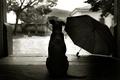 Картинка стиль, зонтик, 152, двор, пес
