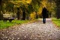 Картинка дорога, парк, настроение, листья