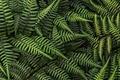 Картинка папоротник, лес, листья
