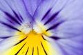 Картинка фиолетовый, пыльца, КУА