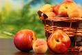Картинка fruit, персики, абрикосы, apricots, фрукты, нектарин, корзина, peaches