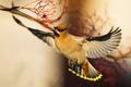 Картинка птица, крылья, свиристель, боке