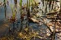 Картинка жаба, трава., болото, река