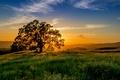 Картинка дерево, трава. горизонт, лучи, луг, солнце, закат