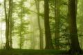 Картинка лес, деревья, туман, Хорватия, зелень, лето, утро