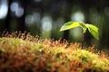 Картинка макро, природа, роса, росток, капли, листья