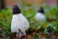 Картинка макро, сетка, белый, листья, ячейки, трава, грибы, клевер