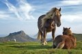 Картинка небо, трава, лошадь, горы