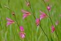 Картинка цветы, трава, поле, луг, растение