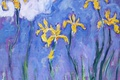 Картинка цветы, картина, Клод Моне, Желтые Ирисы с Розовым Облаком