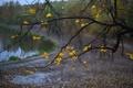 Картинка осень, листья, макро, природа, листва, ветка, желтая