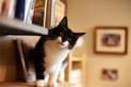 Картинка situation, funny, books, Cat, eyes, nose, mustache, feline, shelves, animal