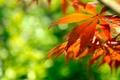 Картинка макро, листва, блики, ветка, осень