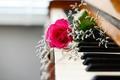 Картинка цветы, пианино, музыка