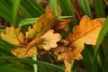 Картинка зеленый, осень, Листья