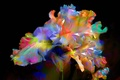 Картинка рендеринг, лепестки, цветок, природа