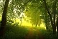 Картинка дорога, лес, свет, пейзаж, природа