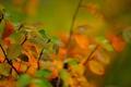 Картинка ветка, осень, листья