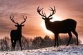 Картинка солнце, олени, зима