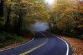 Картинка дорога, осень, лес, асфальт, природа, туман, листва