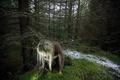 Картинка деревья, заблудилась, Девушка, лес